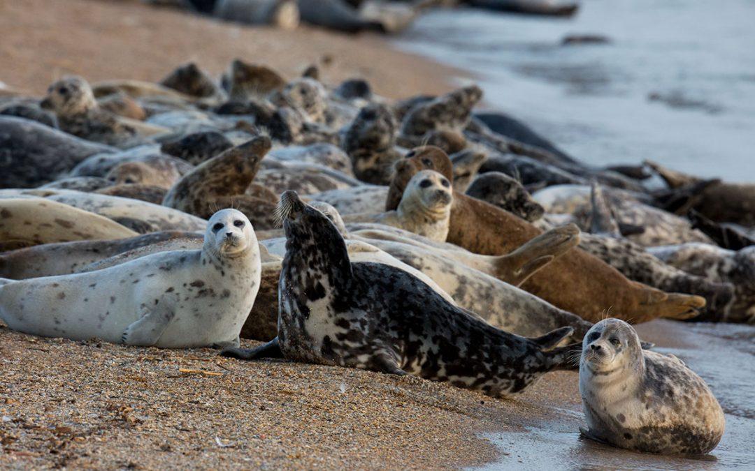 В России стартует проект по сохранению каспийских тюленей